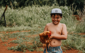 A young boy holding a chicken